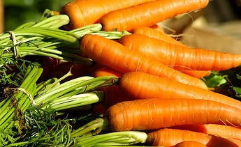 3183.vegetables-1067269_1920.867x531!.358x.jpg