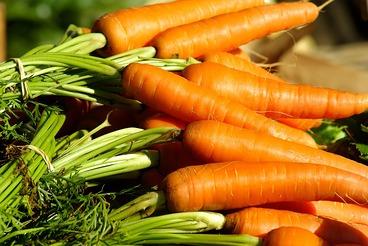 3183.vegetables-1067269_1920.x246.jpg